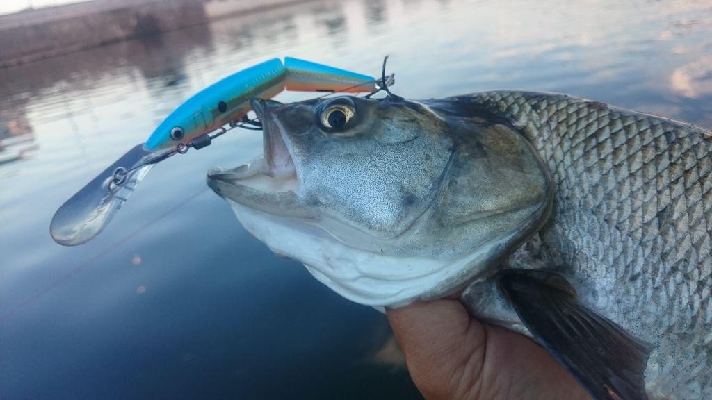 Přívlač s woblery 1. část – charakteristika wobleru jako rybářské nástrahy