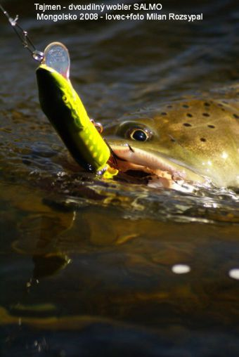 Vaše úlovky - lososovité potvůrky
