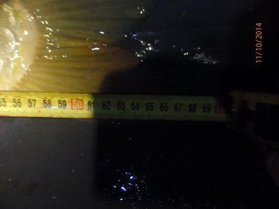 Kapr 68cm z loňského podzimu